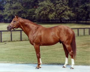 Secretariat, 1973 Triple Crown Winner, was considered the greatest racehorse in history